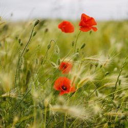 Flourishing – Aufblühen statt Ausbrennen